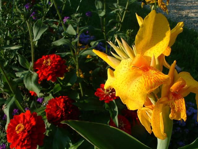 Fleur jaune de Sèvres