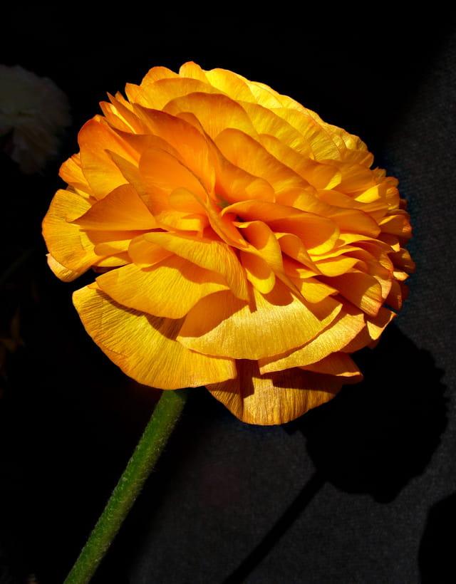 Fleur or