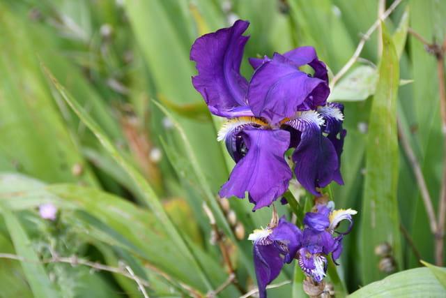 Fleur paréidolie.