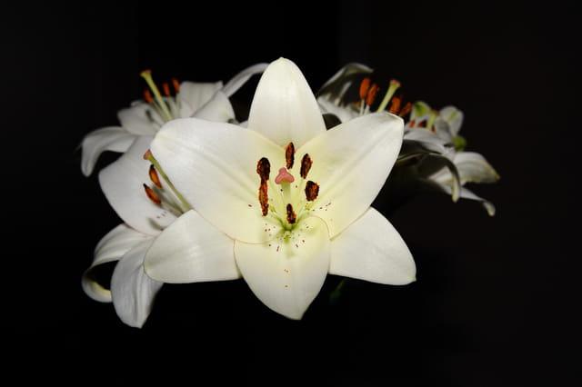 Fleures de Lys