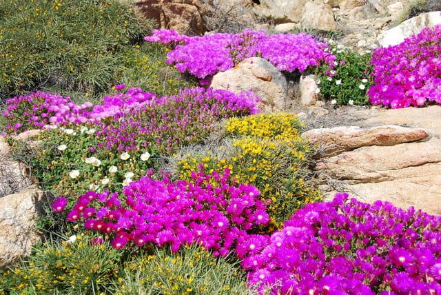 Fleurs à Calvi
