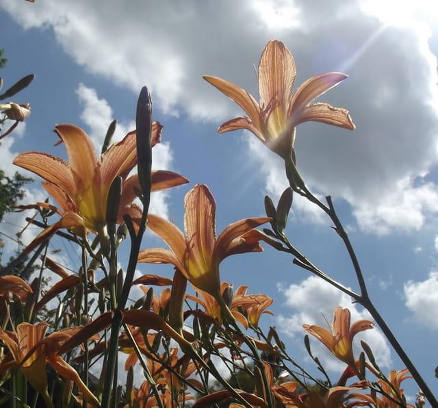 Fleurs au jardin par jacqueline kerdanoff sur l 39 internaute for Fleurs thes au jardin