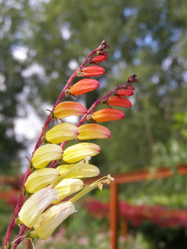 Fleurs aux couleurs automnales