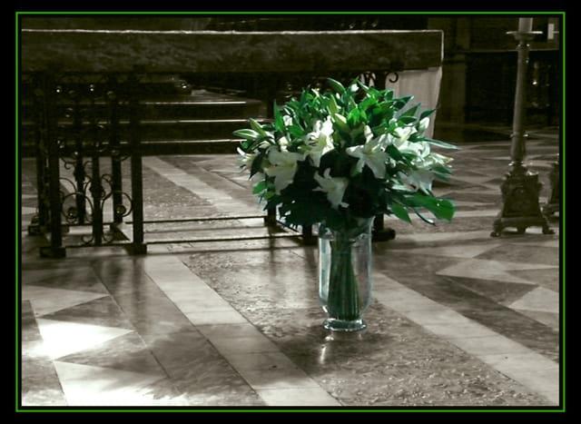Fleurs blanches dans la Cathédrale