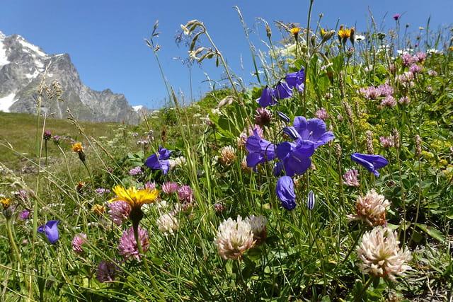 Fleurs d'Alpages