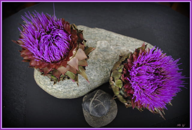 fleurs d'artichauts -2