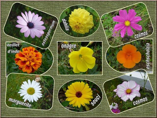 Fleurs d'été, elles fleurissent encore ...