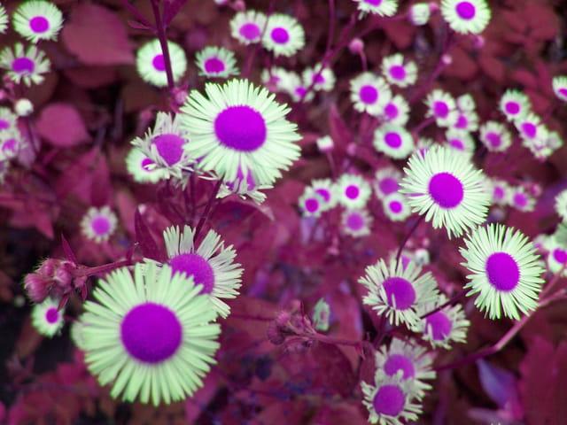 Fleurs de demain