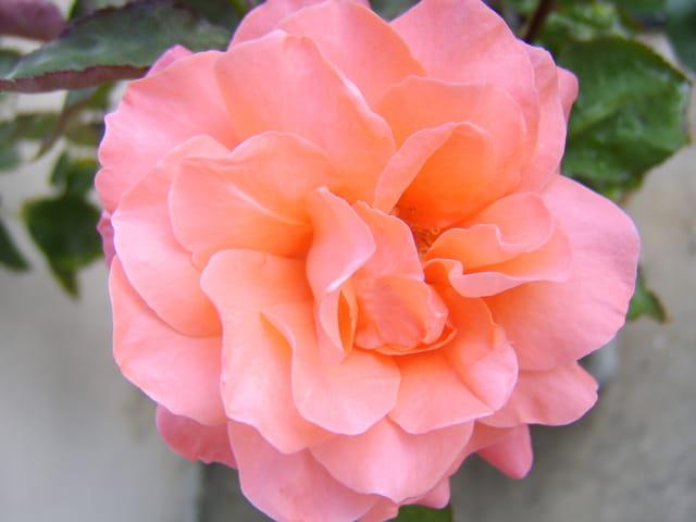 Fleurs de juin 1