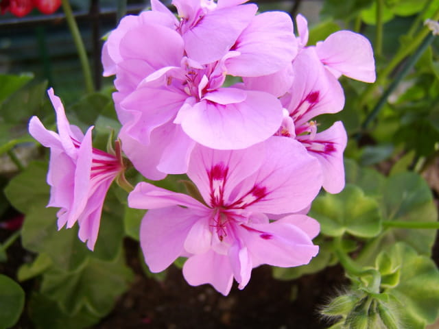 Fleurs de juin 2