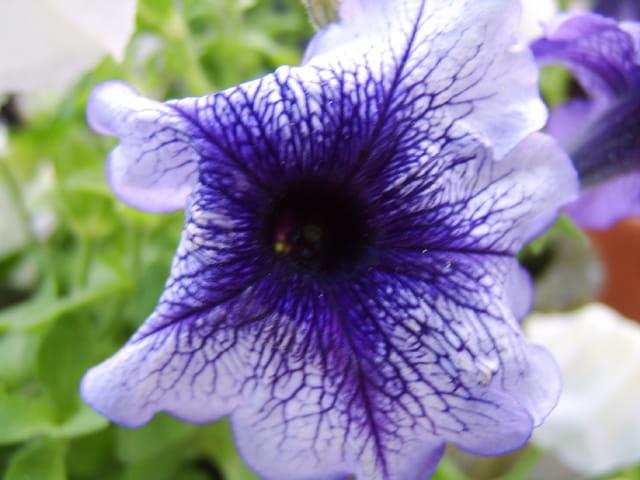 Fleurs de juin 4