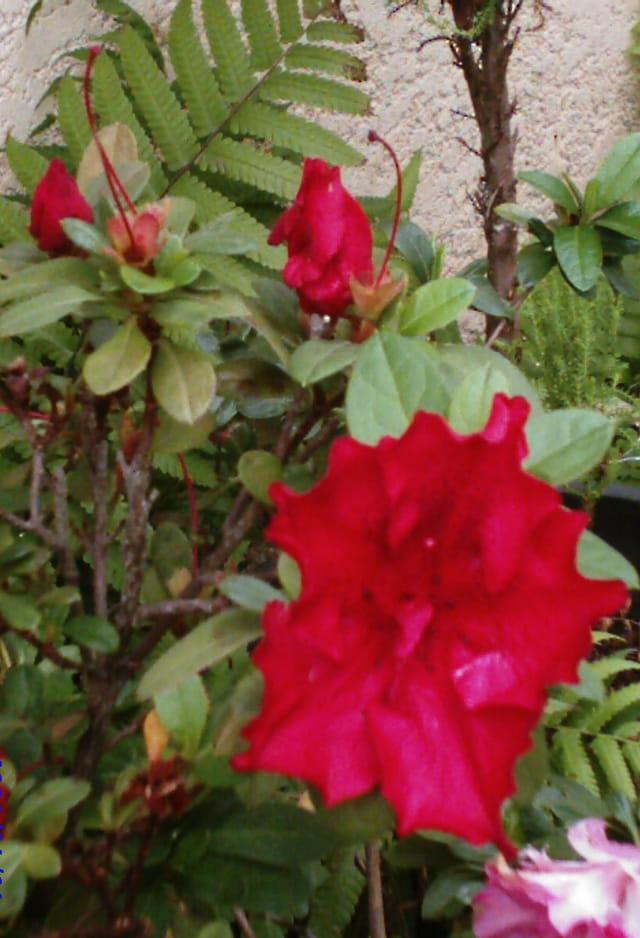 Fleurs de l \' hiver austral
