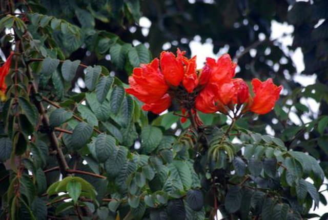 fleurs de La Réunion
