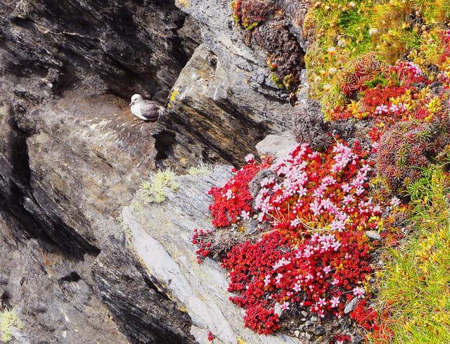 Achill Island - Fleurs de lande et pétrel