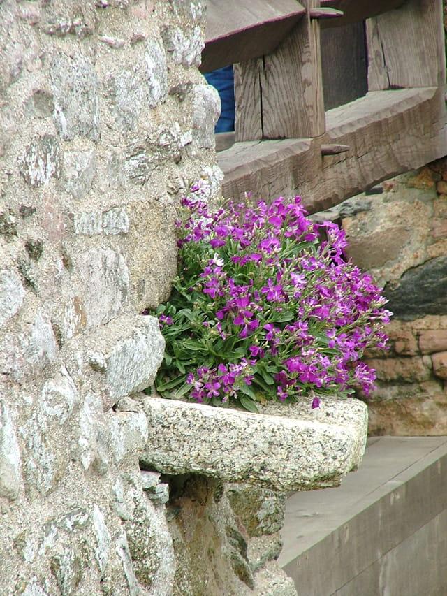 Fleurs de pierre