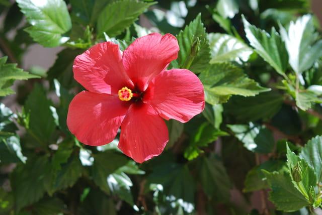Fleurs des îles