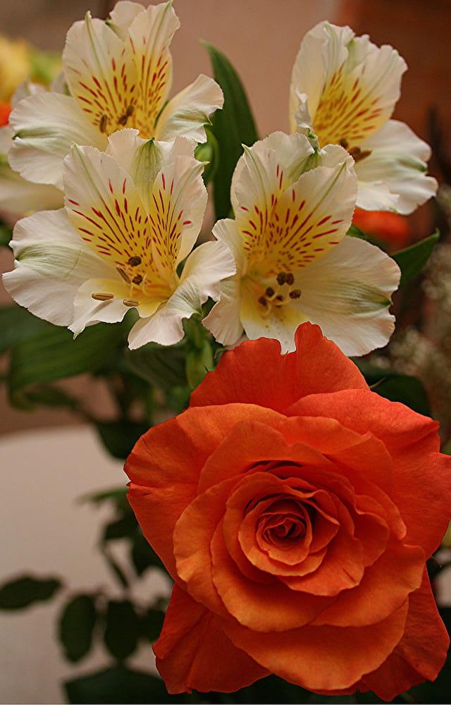 Fleurs e la fête des mères