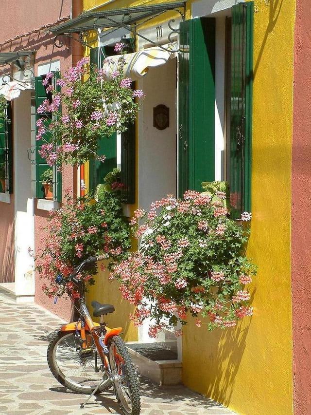 Fleurs et bicyclette