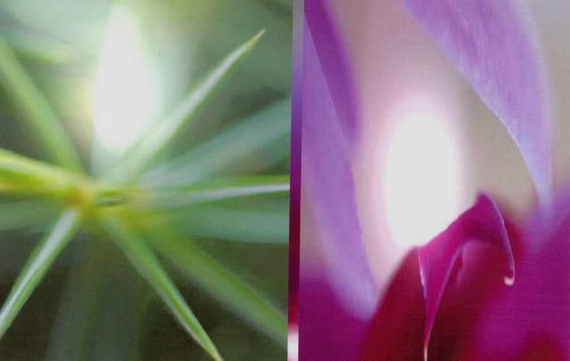 Fleurs et jeux de lumière