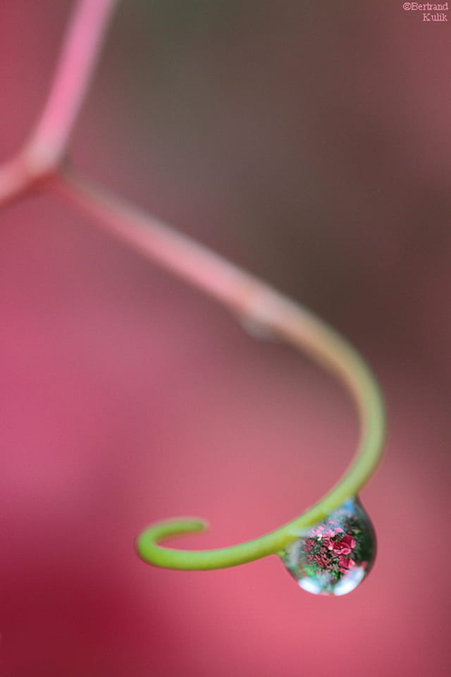 Fleurs goutteuses