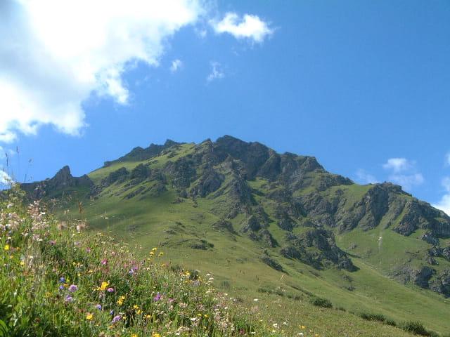 Fleurs & montagne