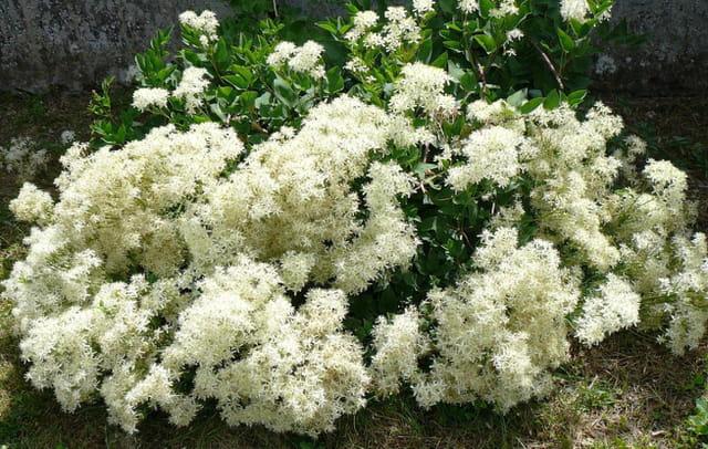 Fleurs ou bouquet de la mariée