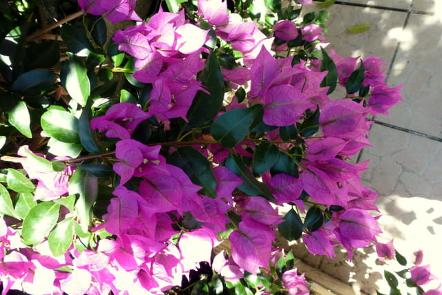 Fleurs ou feuilles ?