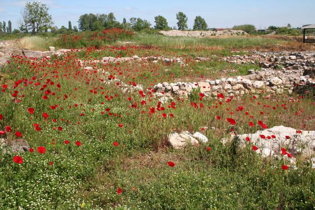 Fleurs sauvages dans les ruines antiques