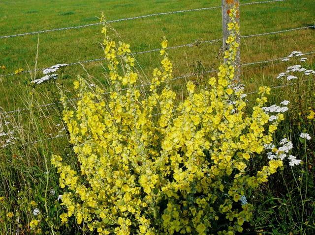 fleurs sauvages jaunes de nom inconnu par jacqueline dubois sur l 39 internaute. Black Bedroom Furniture Sets. Home Design Ideas