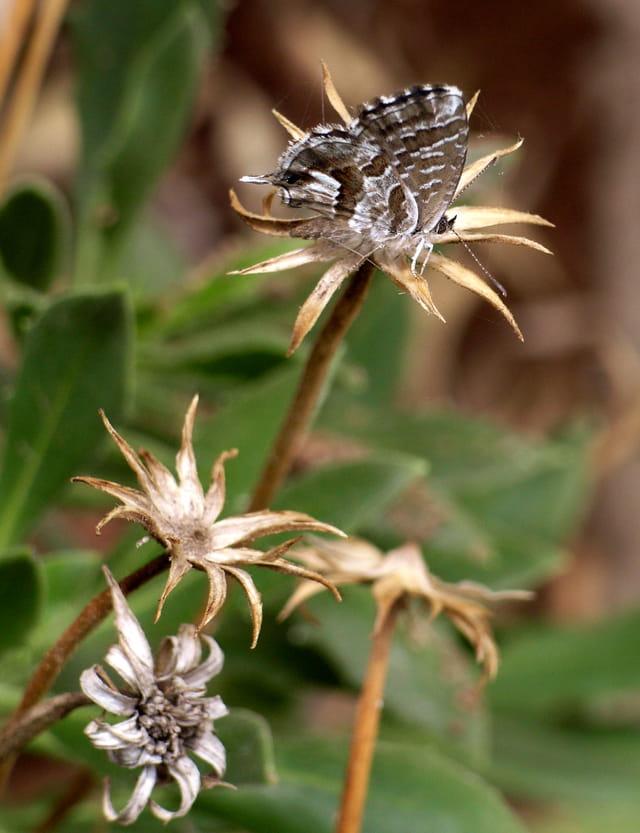 Fleurs sèches avec papillon