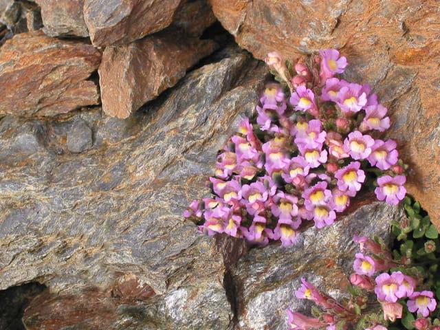 Fleurs Sierra Nevada
