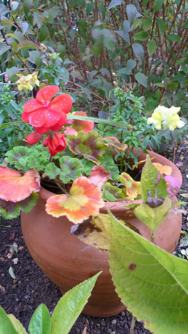 floraison d'été