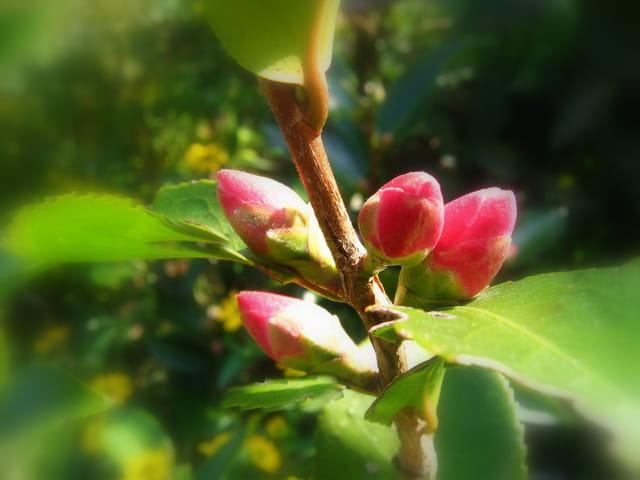 Floraison prochaine