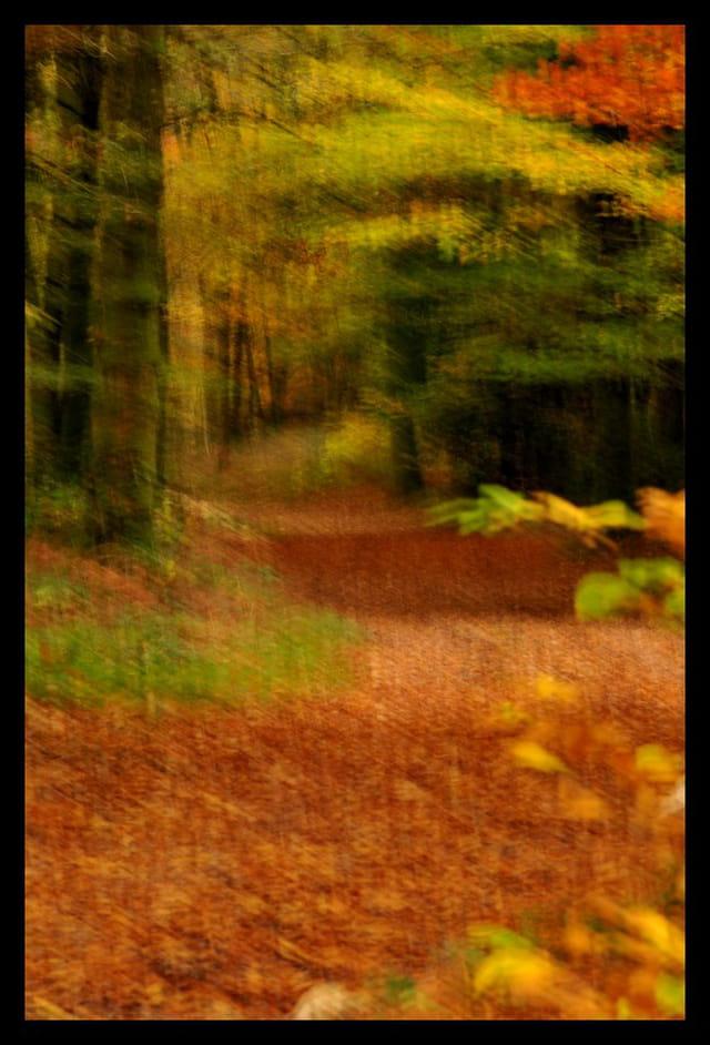 Flou d'automne...