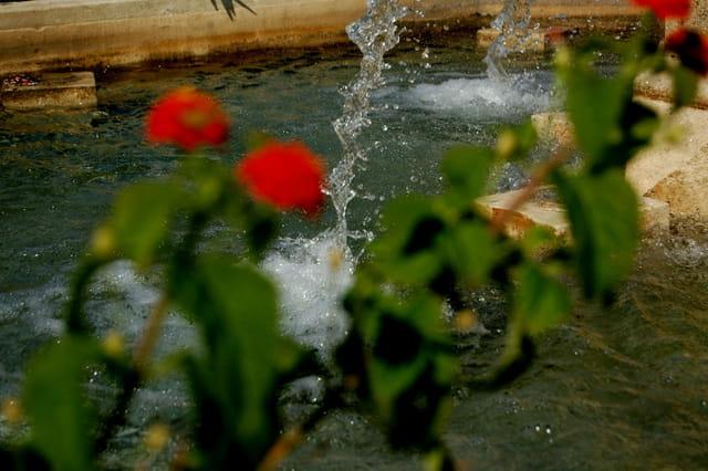 fontaine avec fleurs