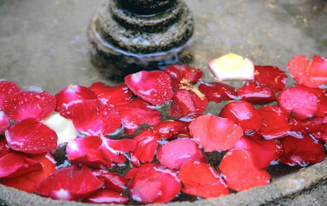 Fontaine de pétales de roses