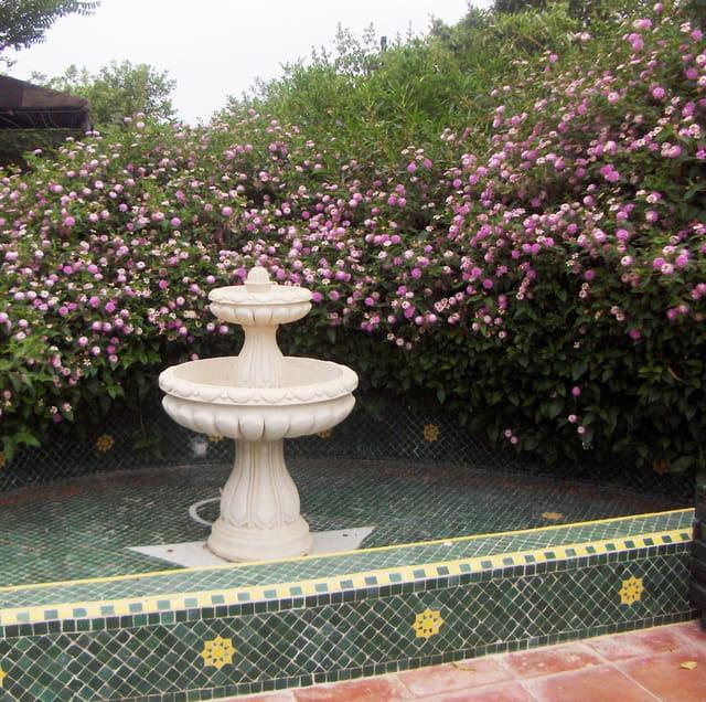 Fontaine et lantana