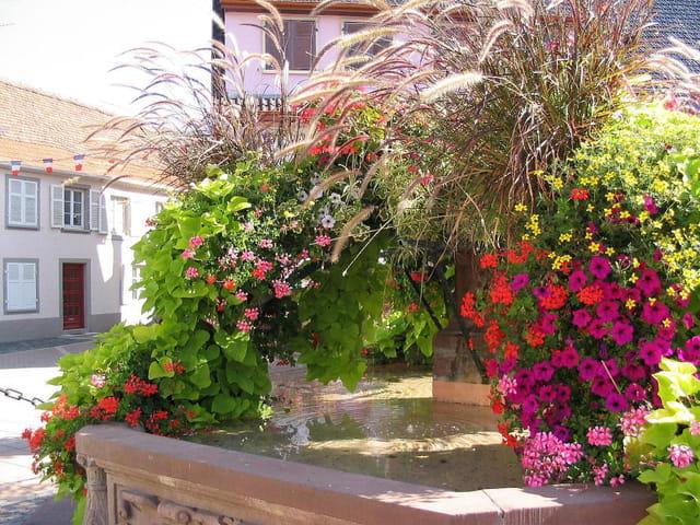 Fontaine fleurie