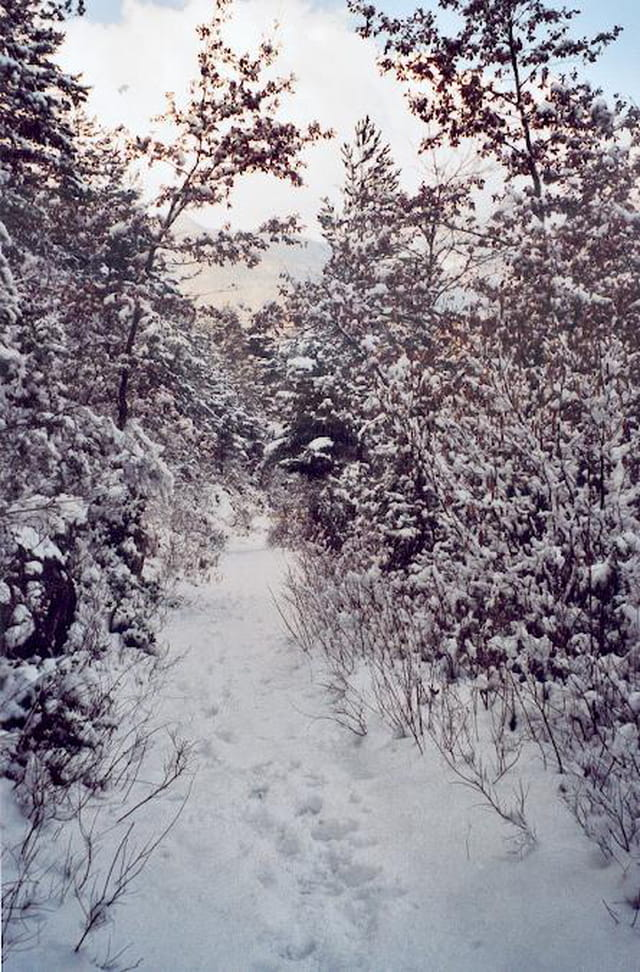 Forêt d'axat
