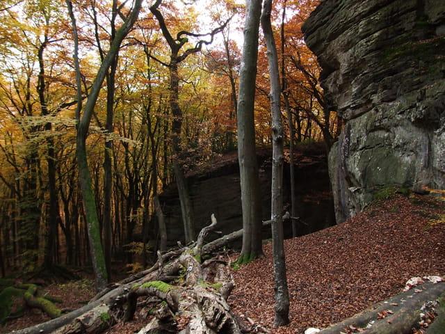 Forêt de Müllerthal en automne