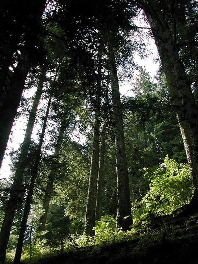 Forêt de Tanargue