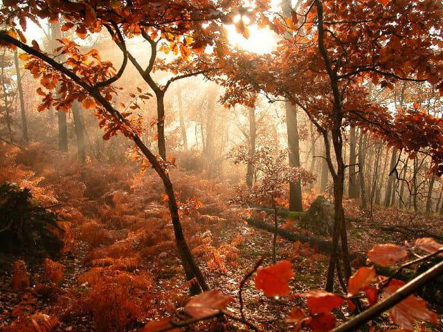 Forêt embrumée !