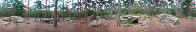 Forêt en relief