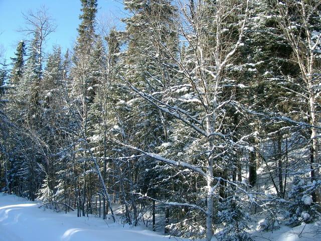 Forêt enneigé