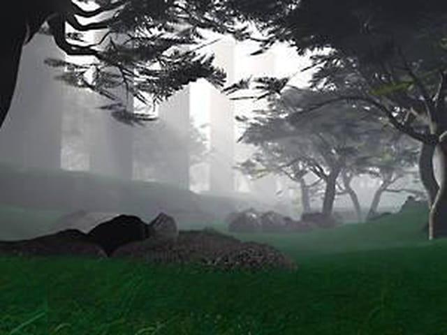 Forêt le soir