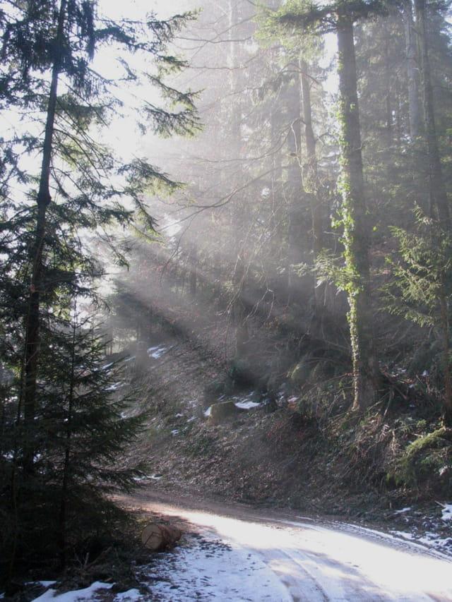 Forêt noire : en forêt