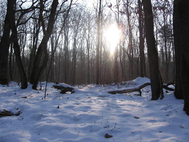 Forêt sous la neige