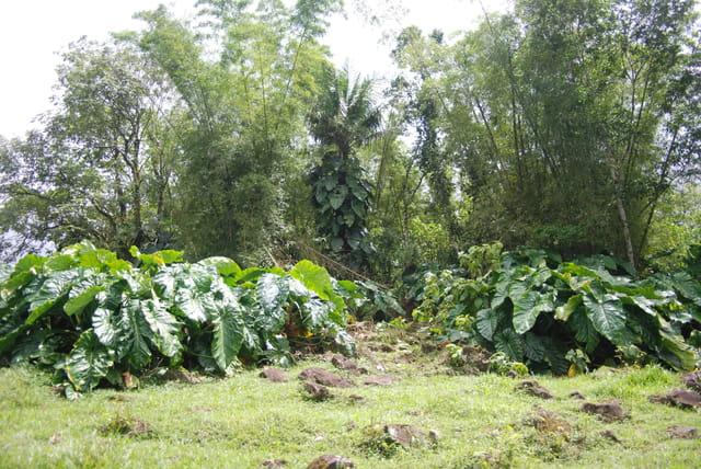 forêt tropicale humide de la Guadeloupe