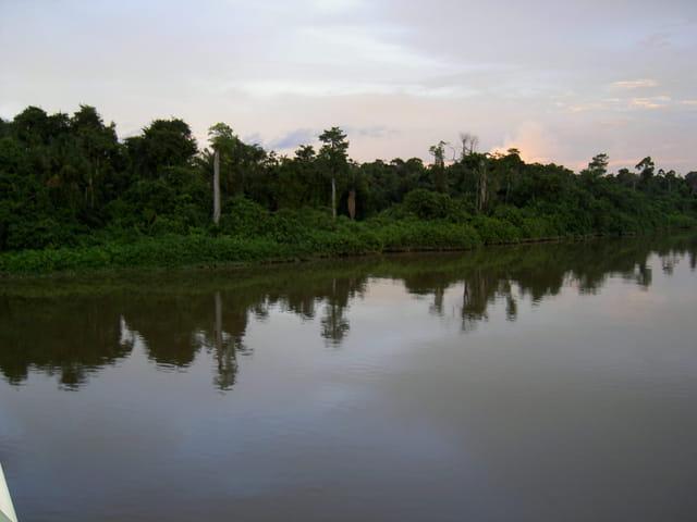 Forêt vue du pont de Mana