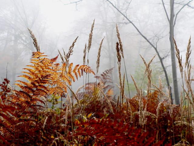 Fougères et brouillard